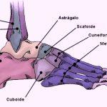 scheletro piede