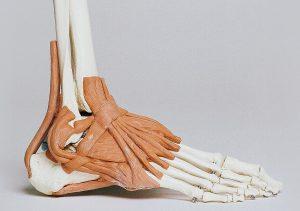 ossa piedi