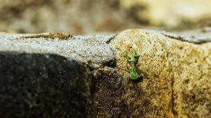 insetti giardino alchimissa