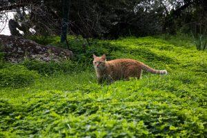 gatto patuscino