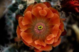 fiore arancione