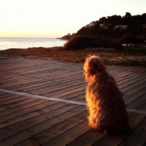 Frida guarda il tramonto Alchimissa B&B